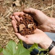 hands-soil1